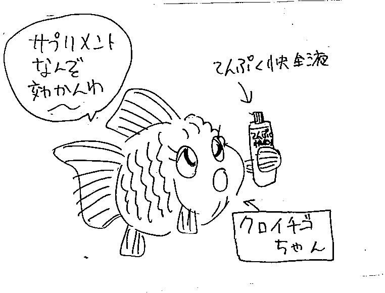 金子咲さん36号イラスト