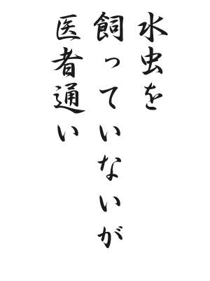 川柳 HP111